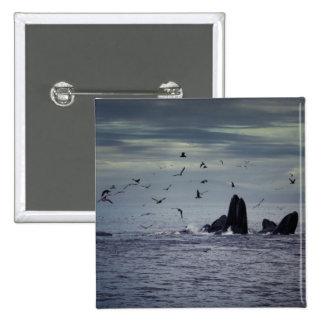 Whale 2 Inch Square Button