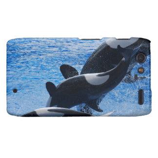 whale-77 droid RAZR carcasas