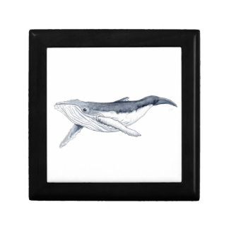 whale baby fond transparent gift box