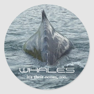 Whale Back and Dorsal Fin Classic Round Sticker