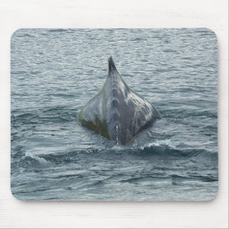 Whale Back and Dorsal Fin Mouse Pad