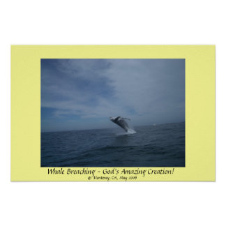 Whale Breaching - God's Amazing Creation! Poster