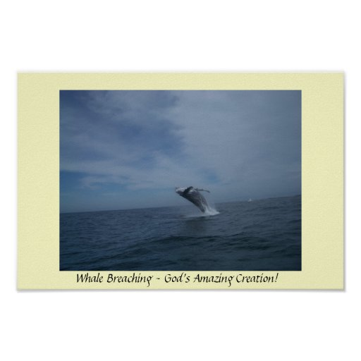 Whale Breaching Poster