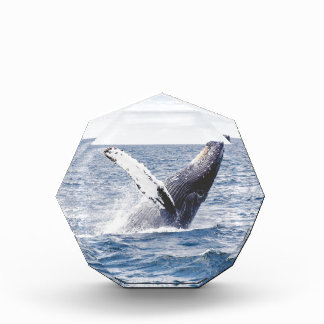 Whale Breaching the Water Award