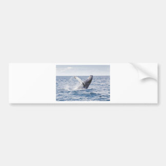 Whale Breaching the Water Bumper Sticker