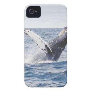Whale Breaching the Water Case-Mate iPhone 4 Case