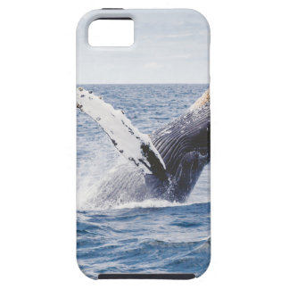 Whale Breaching the Water iPhone SE/5/5s Case