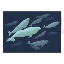 Whale Cards Personalized Beluga Whale Art Cards