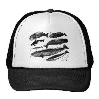 whale-clip-art-1 gorras de camionero