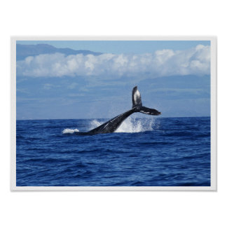 Whale Diving in Ocean, Fluke, Tail out of Water Poster