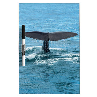 Whale fin Dry-Erase whiteboards