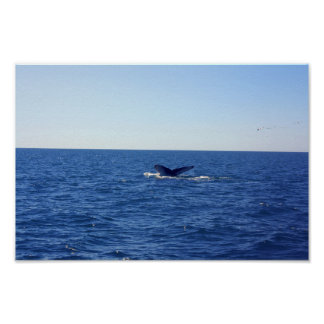 Whale-fin in the sea poster