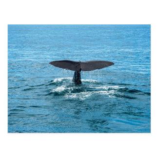 Whale fin postcard
