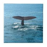 Whale fin small square tile