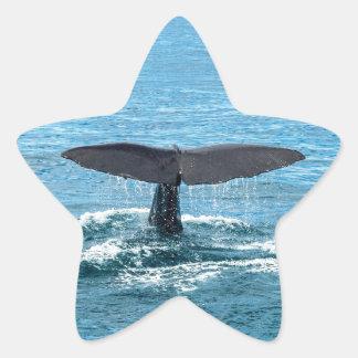 Whale fin star sticker