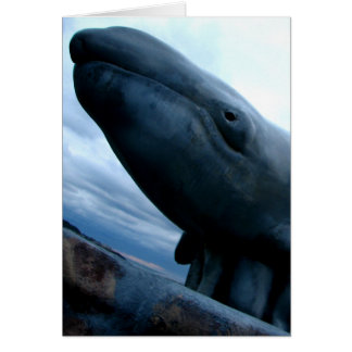 Whale Fly Card
