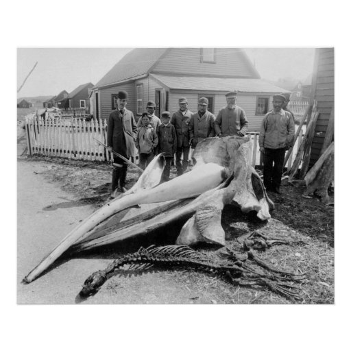 Whale Head, Alaska, early 1900s Poster