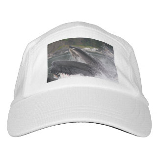 whale headsweats hat