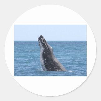 Whale Huggers Square Button Classic Round Sticker