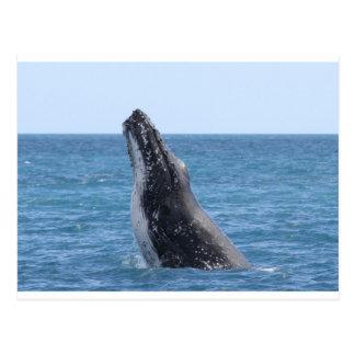 Whale Huggers Square Button Postcard