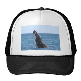 Whale Huggers Square Button Trucker Hat
