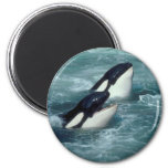Whale Magnets