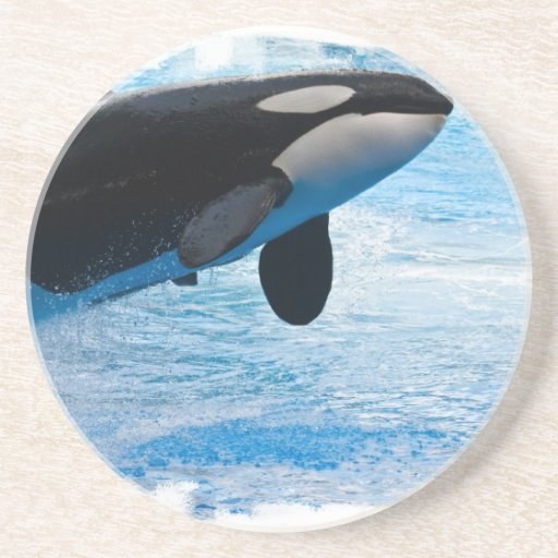 Whale of a Time Coasters