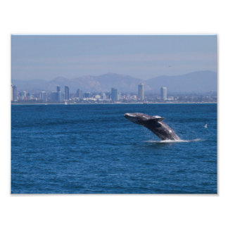 Whale of a time photo print
