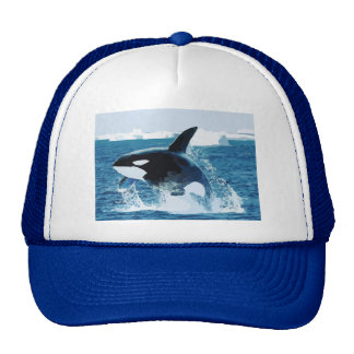 Whale Orca  Water Animal Sea Ocean Fish Peace Love Hats