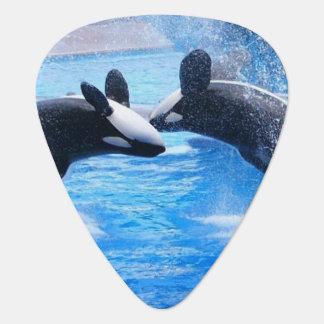 Whale Photo Guitar Pick