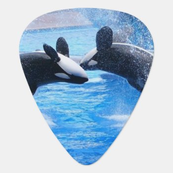 Whale Photo Guitar Pick by WildlifeAnimals at Zazzle
