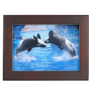 Whale Photo Memory Box