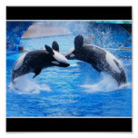 Whale Photo Poster Print