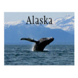 Whale Playtime; Alaska Post Cards