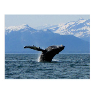 Whale Playtime; No Text Postcard