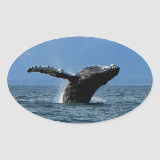 Whale Playtime Oval Sticker