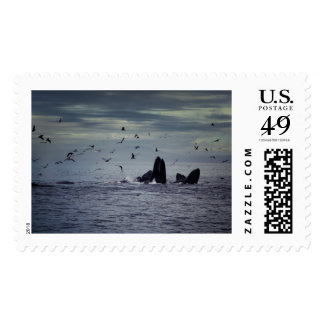 Whale Postage Stamp