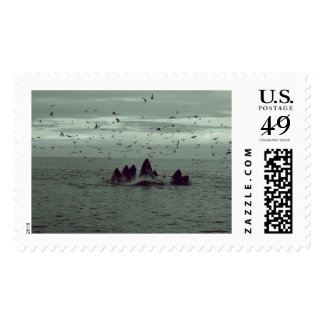 Whale Postage Stamps