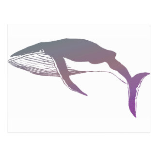 Whale Postcards