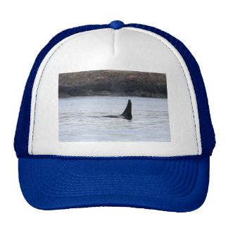 Whale: Resident Orca Whale Killer Whale Trucker Hats