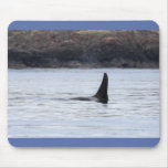 Whale: Resident Orca Whale Killer Whale Mousepads