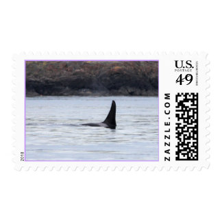 Whale: Resident Orca Whale Killer Whale Postage Stamp