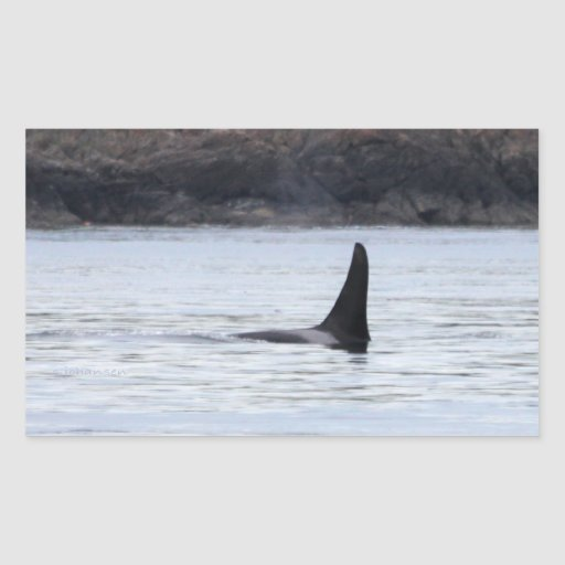 Whale: Resident Orca Whale Killer Whale Rectangular Sticker