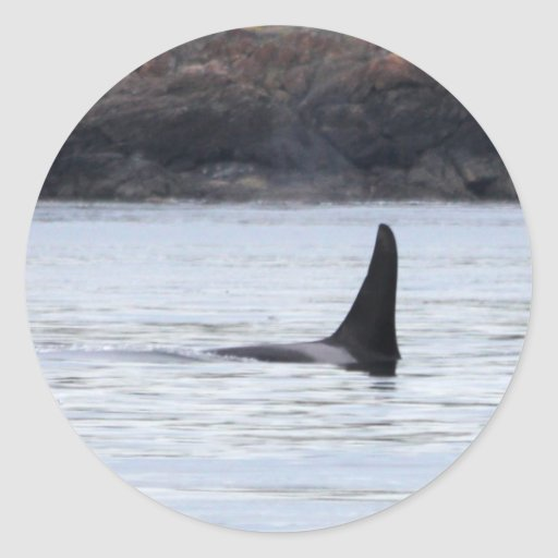 Whale: Resident Orca Whale Killer Whale Classic Round Sticker