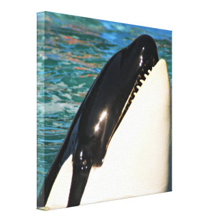 Whale Saying Hello Canvas Print