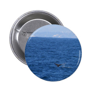 Whale Seen From One Of The Whale Tour Boats In San Pinback Buttons