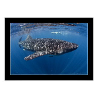 Whale shark #5 poster