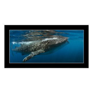 Whale shark #7 poster