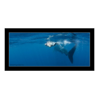 Whale shark and Christina Poster