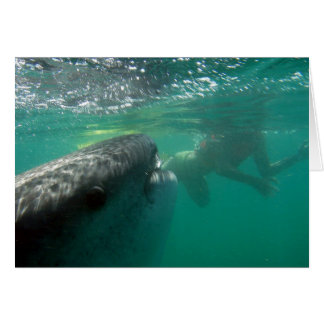 Whale Shark and Snorkeler Card